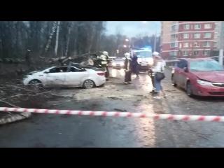 Последствия сильного ветра в городе Московский ( 3 микрорайон )