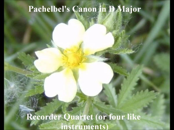 Pachelbel's Canon in D Major - recorder quartet (or other like C instruments: flute, oboe)