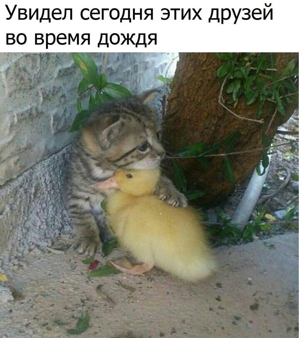 https://pp.userapi.com/c543103/v543103722/23017/abTeisr3fR8.jpg