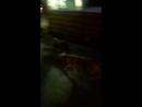 Свора собак в парке им. Ю.Гагарина