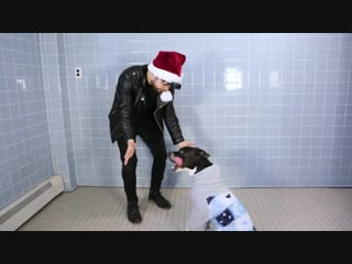 Magic for animal shelter dogs - tbs