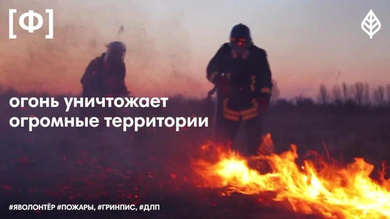 ЯВолонтер - Добровольные лесные пожарные помогают тушить пожары по всей России, 12
