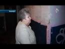 В Барнауле жительница устроила в своей квартире кошачий приют