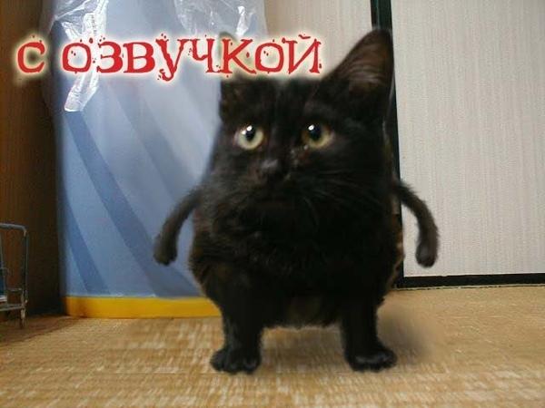 Приколы с котами и смешная озвучка животных Кот и Магия от PSO