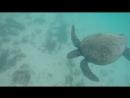 Морская черепаха о. Изабела