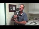 Опухший щенок ювенильный целлюлит / Swollen puppy Juvenile Cellulitis