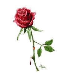 Идеи цветной роз ы