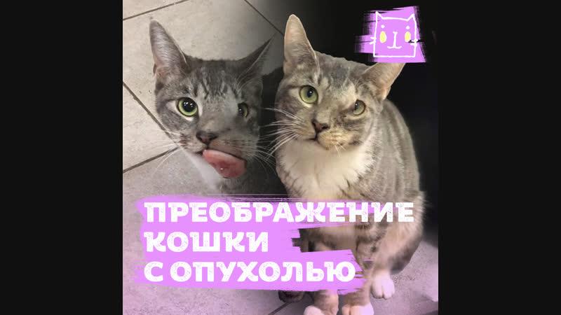Кошку Киту избавили от опухоли