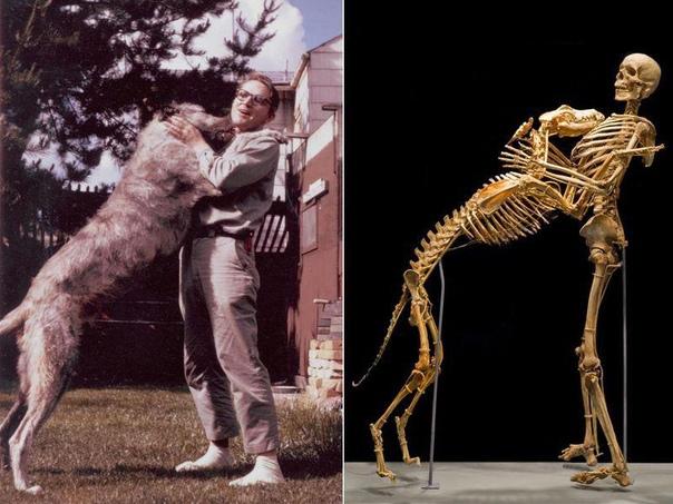 Роберт Кранц завещал свое тело науке. Роберт Кранц известный исследователь снежного человека и древних гоминид, криптозоолог, антрополог, эволюционист, университетский преподаватель, писатель и