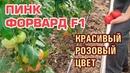 ПИНК ФОРВАРД F1 - КРАСИВЫЙ РОЗОВЫЙ ПОМИДОР С ШИКАРНЫМ ЦВЕТОМ (01-10-2018)