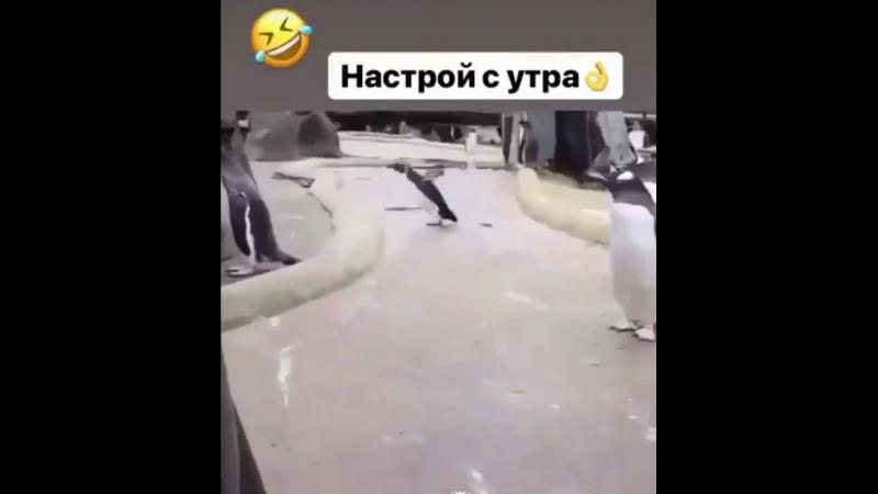 Танцы пингвина » Freewka.com - Смотреть онлайн в хорощем качестве
