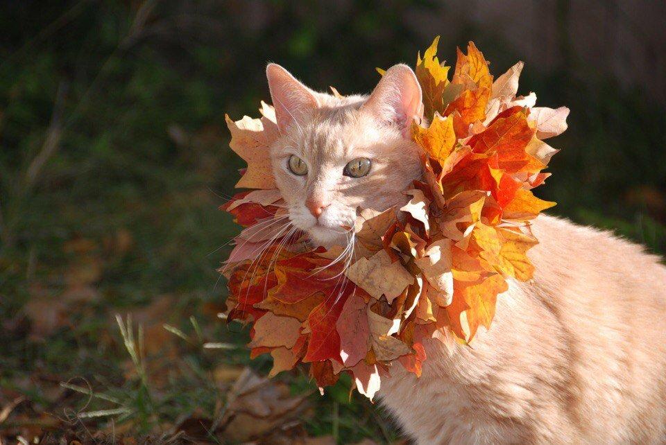 А спонсор этого поста - Осенняя фотосессия!  Осенняя фо�...