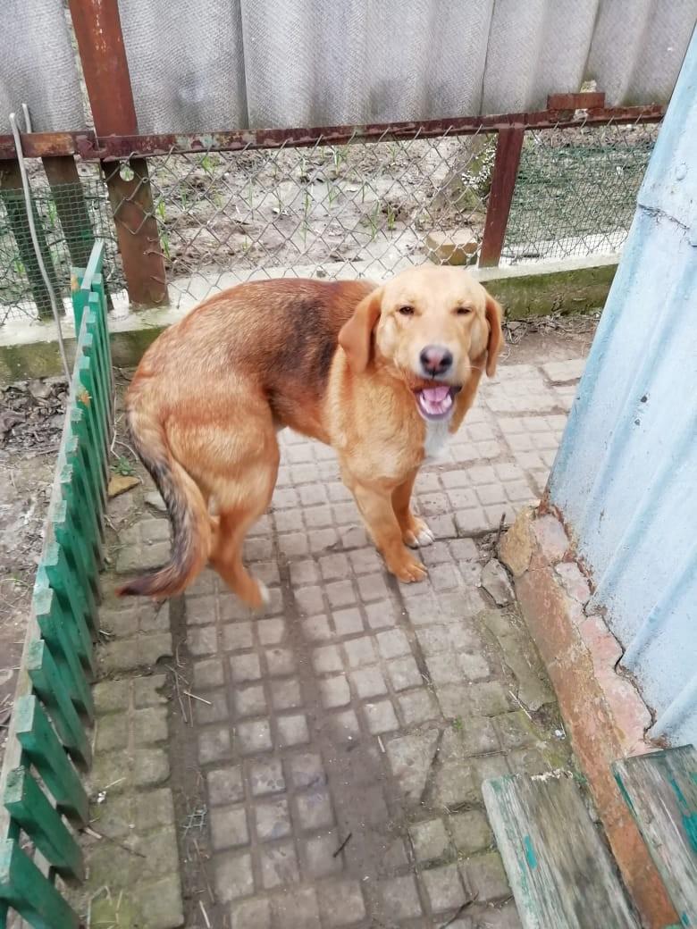 Вчера вечером на перекрёстке Пластуновской и Набережной убежала собака и не вернулась.