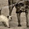 •Помощь бездомным животным•|г. Благовещенск|