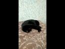 Кошка развлекает саму себя