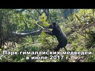 Парк гималайских медведей в июле 2017 г.
