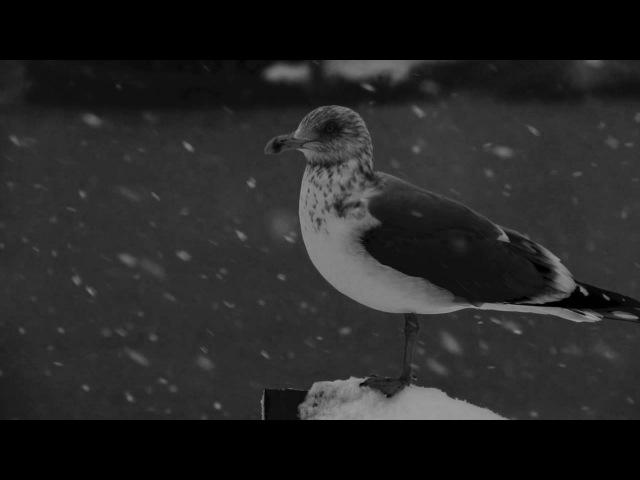 АукцЫон — Чайки