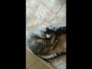Кот Жора - варежка - любимая игрушка