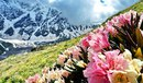 Пора цветения рододендрона в горах Балкарии