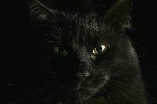 """Предпросмотр - Схема вышивки  """"Черный кот """" - Схемы вышивки - himmelle - Авторы - Портал  """"Вышивка крестом """" ."""