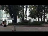 Ветер сбил дерево у входа в Зимний дворец