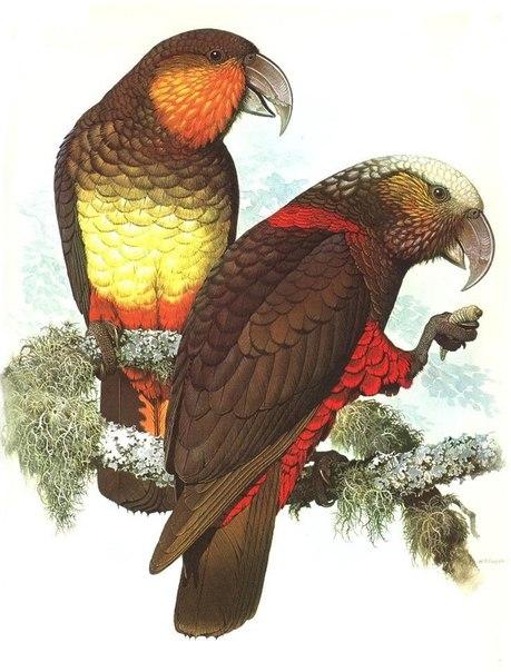 Вымершие и уничтоженные виды попугаев и других птиц D-q1qL43kbg