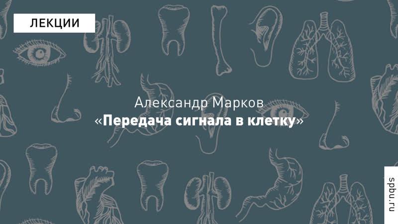 Александр Марков «Передача сигнала в клетку». Курс «Введение в физиологию»