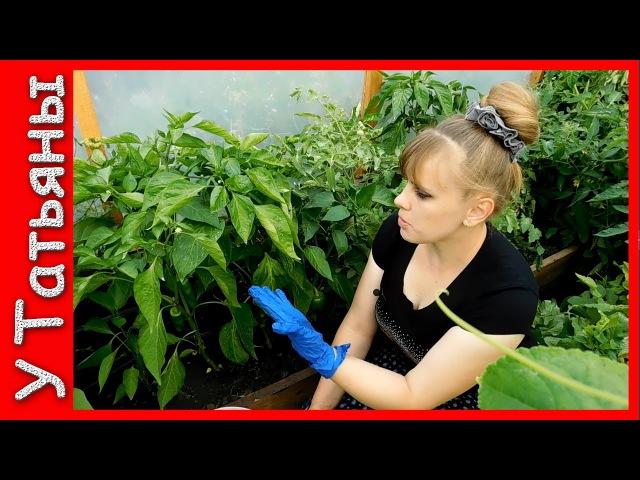 ПЕРЕЦ болгарский /сладкий/. Подкормка №1 удобрение в период плодоношения для перца, томатов, огурцов