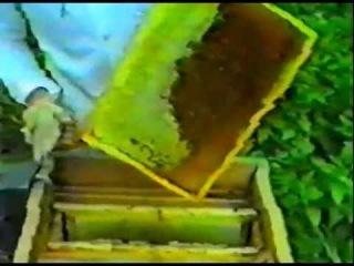 Заготовка кормовых запасов для пчел на зиму (видео урок) [uroki-online.com]