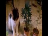 Кот ест коноплю. Последствия