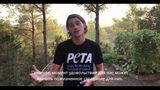 Jack Harries Reveals the Tourist Traps That Abuse Animals RUS SUB