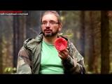 Мухомор - хороший и вкусный гриб, если уметь его готовить, www.grib.tv