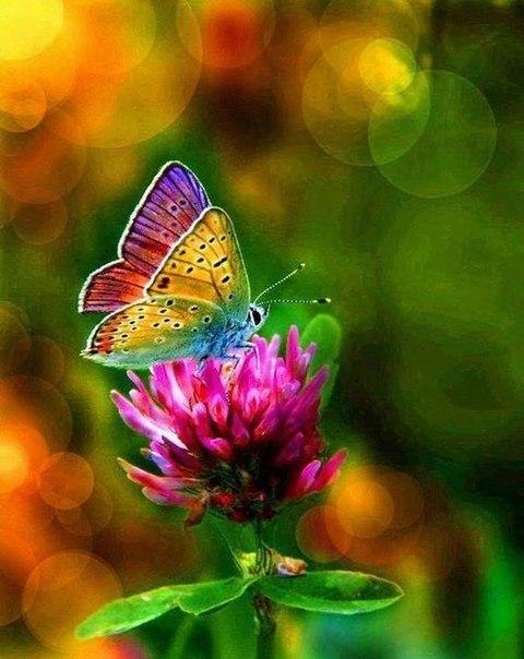 Сочные цвета в природе