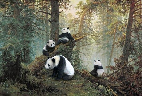 Мишки-панды в сосновом лесу.