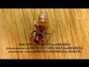 Золотая пчела Buckfast Golden Bee