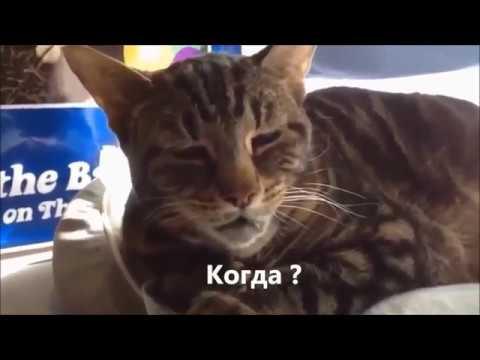 Говорящие коты! Лучшая подборка №6