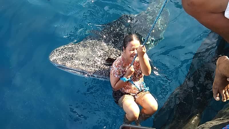 китовые акулы тут