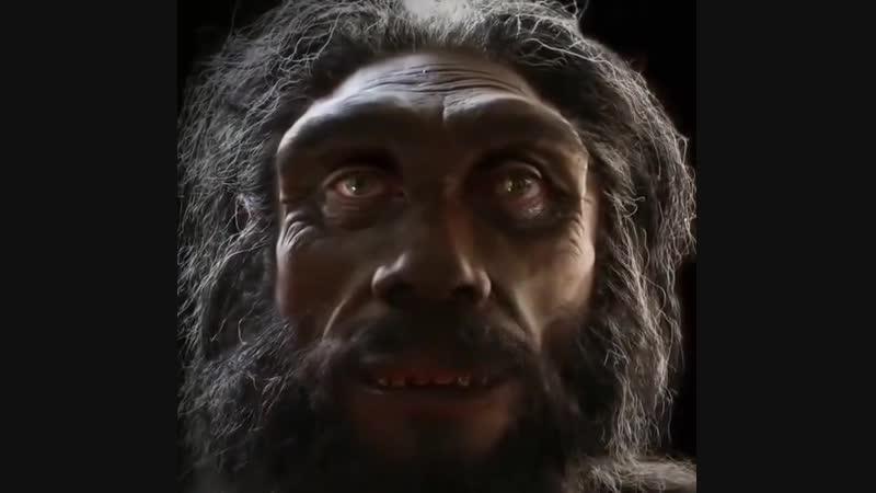 Как менялось лицо человека в процессе эволюции rfr vtyzkjcm kbwj xtkjdtrf d ghjwtcct djk.wbb