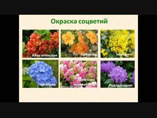 Марафон по кустарникам_день 2