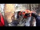 Промышленный альпинизм Арбористика. Удаление дерева по частям.
