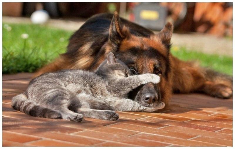 Дружба кота і собаки фото