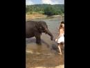Мучители слонят
