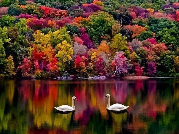 Хэмпшир осенью, Великобритания.