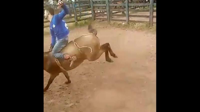 ковбой
