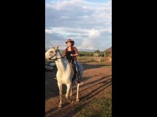 MLG Серая лошадь