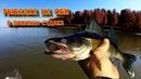 Рыбалка на оби ловля щуки и судака на спиннинг рыбалка на джиг