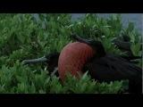 Дикие Карибы - Острова  сокровищ, 1 часть (720p.HDTV,ru)