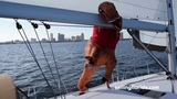 Milo the T-Rex Goes Sailing