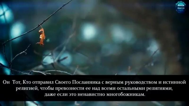 ❗Мухаммад Люхайдан сура 9 аят 30-35...