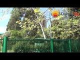 jamtour.org пансионат Энергетик (Гагра, Абхазия) въезд в пансионат